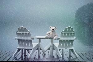 teddy bear in rain